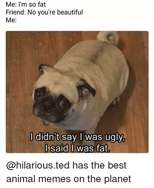 Fat Friend: Me: I'm so fat  Friend: No you're beautiful  Me:  l didn't say I was ugly  l said I was fat.  I said 0 @hilarious.ted has the best animal memes on the planet