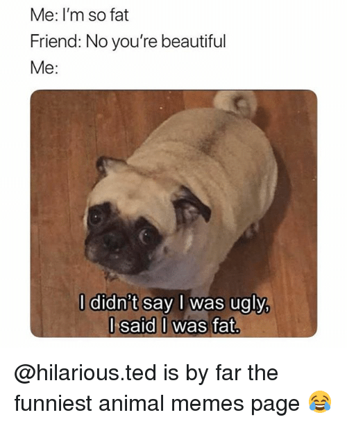 Fat Friend: Me: I'm so fat  Friend: No you're beautiful  Me:  l didn't say I was ugly,  l said I was fat @hilarious.ted is by far the funniest animal memes page 😂
