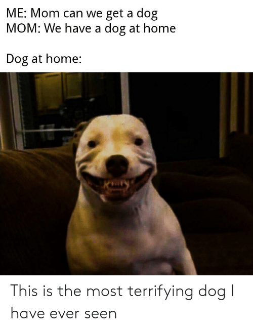 Home, Dank Memes, and Mom: ME: Mom can we get a dog  MOM: We have a dog at home  Dog at home: This is the most terrifying dog I have ever seen