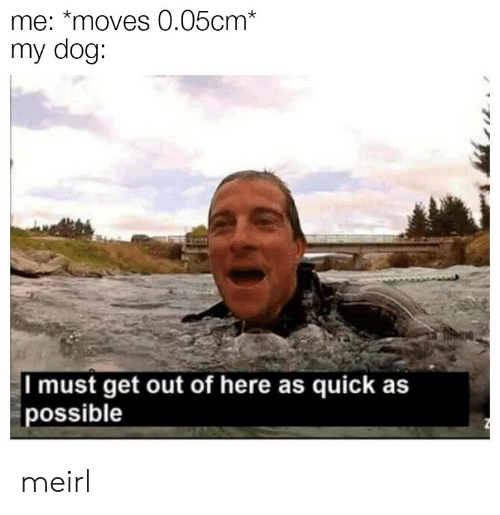 MeIRL, Dog, and Get: me: *moves 0.05cm*  my dog:  I must get out of here as quick as  possible meirl