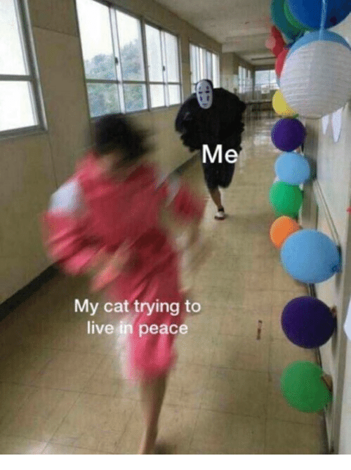 Dank, Live, and Peace: Me  My cat trying to  live in peace
