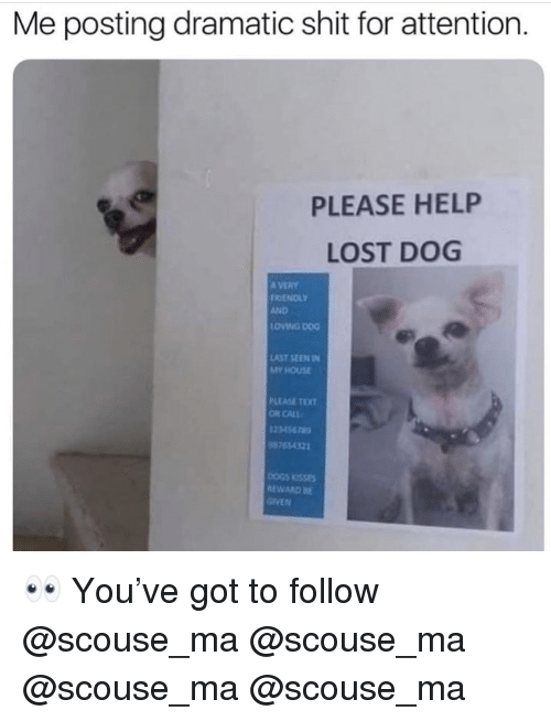 Memes, My House, and Shit: Me posting dramatic shit for attention.  PLEASE HELP  LOST DOG  A VERY  RIENDLY  AND  LDİNG DOG  AST SEEN IN  MY HOUSE  PLEASE TO  OR CALL  123456789  8765432  EWARD 👀 You've got to follow @scouse_ma @scouse_ma @scouse_ma @scouse_ma