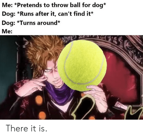 There It Is: Me: *Pretends to throw ball for dog*  Dog: *Runs after it, can't find it  Dog: *Turns around*  Me: There it is.