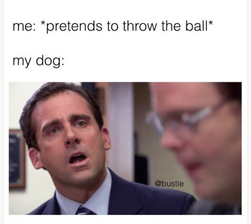 Bustle: me: *pretends to throw the ball*  my dog:  @bustle