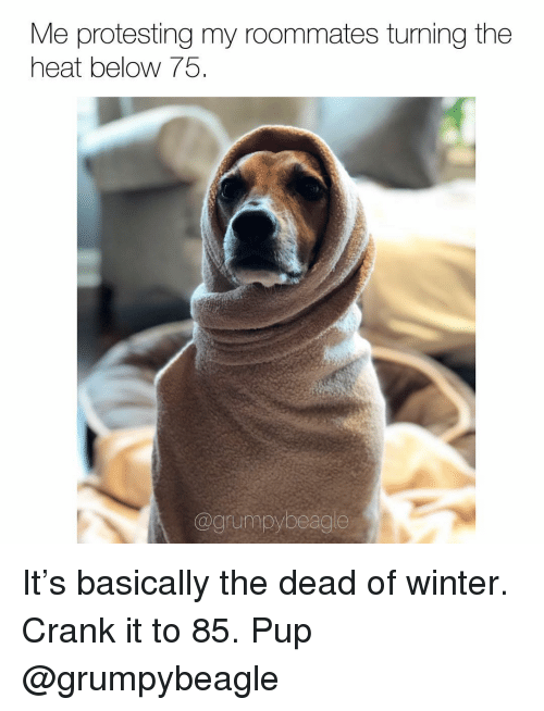 Memes, Winter, and Heat: Me protesting my roommates turning the  heat below 75  @grumpybeagle It's basically the dead of winter. Crank it to 85. Pup @grumpybeagle