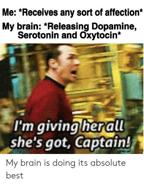 Best, Brain, and Got: Me: *Receives any sort of affection*  My brain: *Releasing Dopamine,  Serotonin and Oxytocin*  I'm giving herall  she's got, Captain! My brain is doing its absolute best