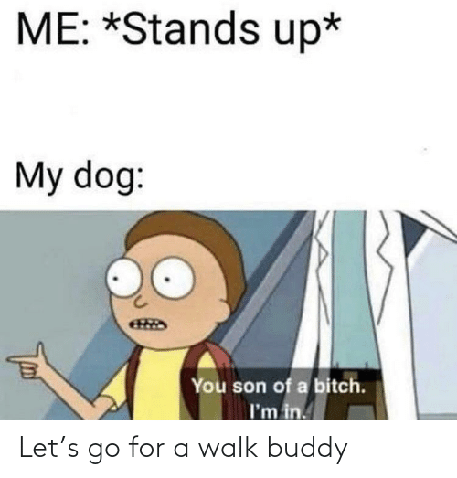 Bitch, Dog, and You: ME: *Stands up*  My dog:  You son of a bitch.  I'm in. Let's go for a walk buddy