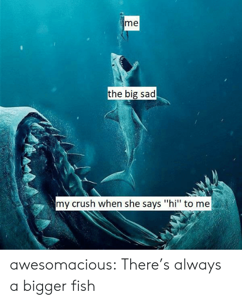 "Crush, Tumblr, and Blog: me  the big sad  my crush when she says ""hi"" to me awesomacious:  There's always a bigger fish"