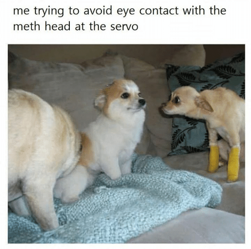 Head, Memes, and 🤖: me trying to avoid eye contact with the  meth head at the servo
