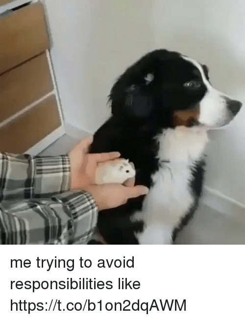 Relatable, Like, and  Responsibilities: me trying to avoid responsibilities like https://t.co/b1on2dqAWM