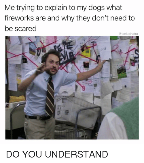 Dogs, Funny, and Fireworks: Me trying to explain to my dogs what  fireworks are and why they don't need to  be scared  @tank.sinatra DO YOU UNDERSTAND