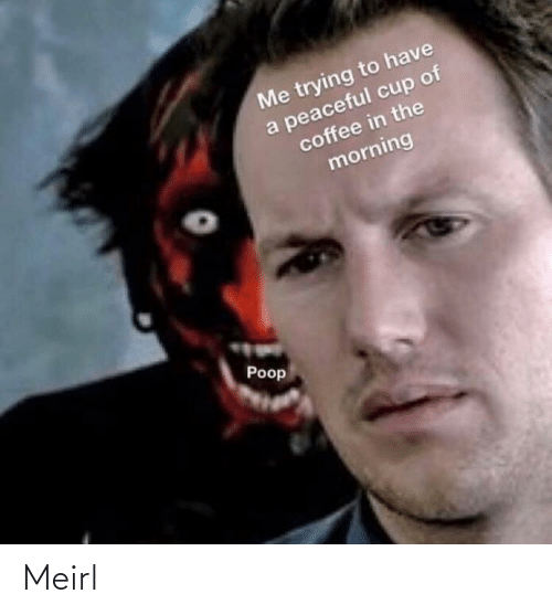 the morning: Me trying to have  a peaceful cup of  coffee in the  morning  Poop Meirl