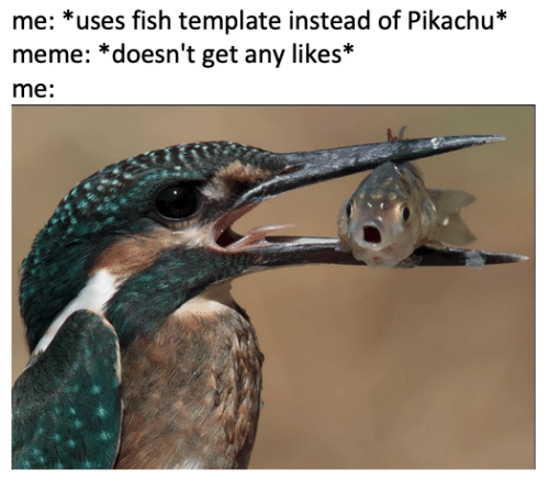 "Pikachu Meme: me: ""uses fish template instead of Pikachu*  meme: *doesn't get any likes*  me:"