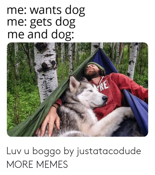 luv: me: wants dog  me: gets dog  me and dog:  RE Luv u boggo by justatacodude MORE MEMES