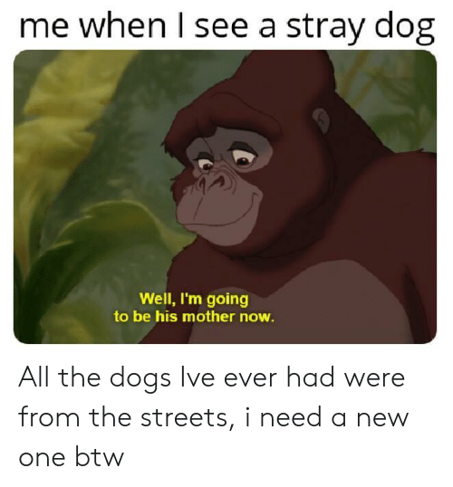 Dogs, Streets, and All The: me when l see a stray dog  Well, I'm going  to be his mother now All the dogs Ive ever had were from the streets, i need a new one btw