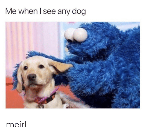 MeIRL, Dog, and When: Me when lsee any dog meirl