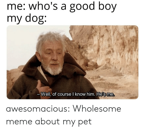meme about: me: who's a good boy  my dog:  те.  Well, of course l know him. He's me awesomacious:  Wholesome meme about my pet