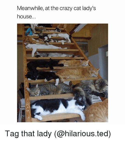 Crazy, Funny, and Ted: Meanwhile, at the crazy cat lady's  house Tag that lady (@hilarious.ted)
