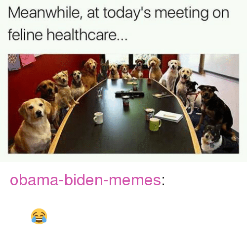 "Obama Biden: Meanwhile, at today's meeting on  feline healthcare <p><a href=""https://obama-biden-memes.tumblr.com/post/158795666608"" class=""tumblr_blog"" target=""_blank"">obama-biden-memes</a>:</p><blockquote><p>😂</p></blockquote>"