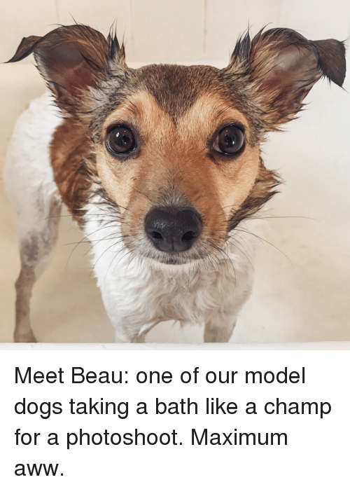 Aww, Dogs, and Dog: Meet Beau: one of our model dogs taking a bath like a champ for a photoshoot. Maximum aww.