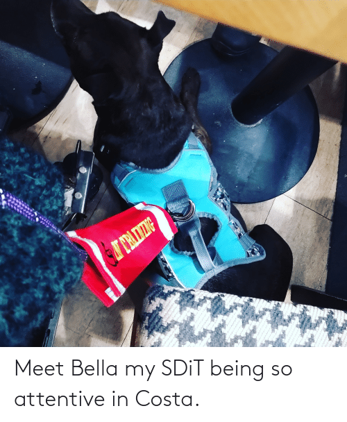 attentive: Meet Bella my SDiT being so attentive in Costa.