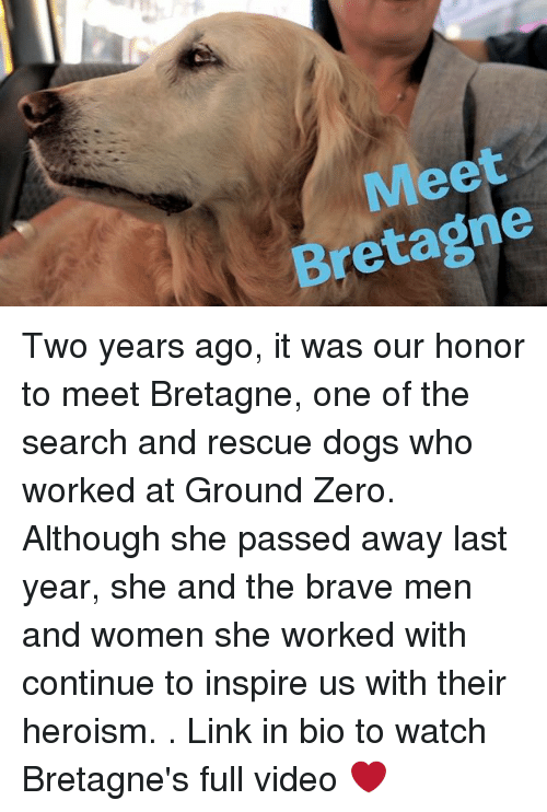 zeroes: Meet  Bretagne Two years ago, it was our honor to meet Bretagne, one of the search and rescue dogs who worked at Ground Zero. Although she passed away last year, she and the brave men and women she worked with continue to inspire us with their heroism. . Link in bio to watch Bretagne's full video ❤️