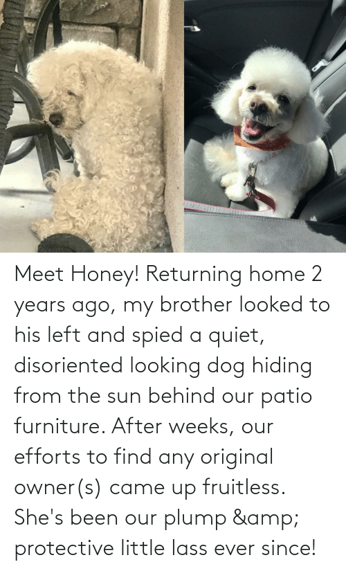 Quiet: Meet Honey! Returning home 2 years ago, my brother looked to his left and spied a quiet, disoriented looking dog hiding from the sun behind our patio furniture. After weeks, our efforts to find any original owner(s) came up fruitless. She's been our plump & protective little lass ever since!