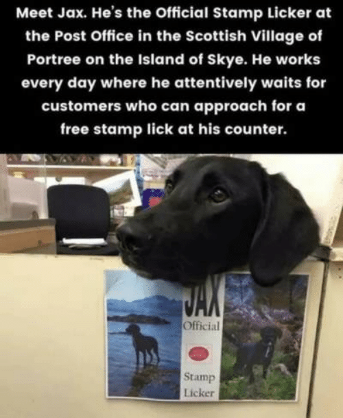 the island: Meet Jax. He's the Official Stamp Licker at  the Post Office in the Scottish Village of  Portree on the Island of Skye. He works  every day where he attentively waits for  customers who can approach for a  free stamp lick at his counter.  Official  Stamp  Licker