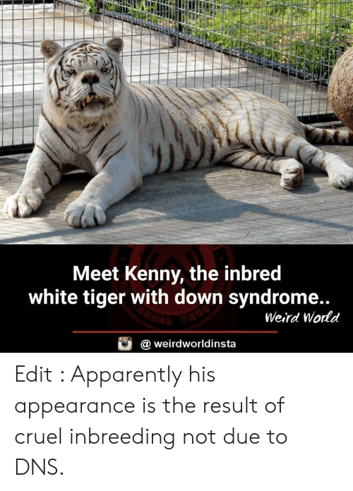 Apparently, Memes, and Weird: Meet Kenny, the inbred  white tiger with down syndrome..  Weird Wodd  @ weirdworldinsta Edit : Apparently his appearance is the result of cruel inbreeding not due to DNS.