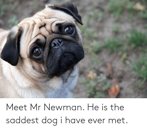 Newman: Meet Mr Newman. He is the saddest dog i have ever met.