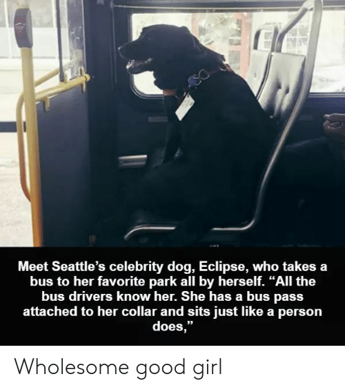 "Eclipse: Meet Seattle's celebrity dog, Eclipse, who takes a  bus to her favorite park all by herself. ""All the  bus drivers know her. She has a bus pass  attached to her collar and sits just like a person  does,"" Wholesome good girl"