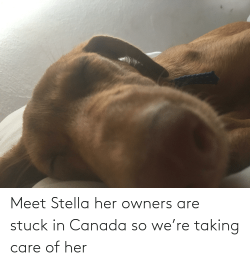 Owners: Meet Stella her owners are stuck in Canada so we're taking care of her