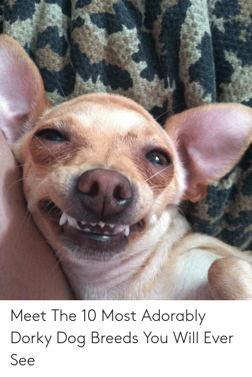 Most Adorably: Meet The 10 Most Adorably Dorky Dog Breeds You Will Ever See