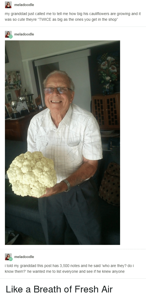"Breath Of Fresh Air: meladoodle  my granddad just called me to tell me how big his cauliflowers are growing and it  was so cute theyre ""TWICE as big as the ones you get in the shop  meladoodle  meladoodle  i told my granddad this post has 3,500 notes and he said who are they? do i  know them? he wanted me to list everyone and see if he knew anyone <p>Like a Breath of Fresh Air</p>"