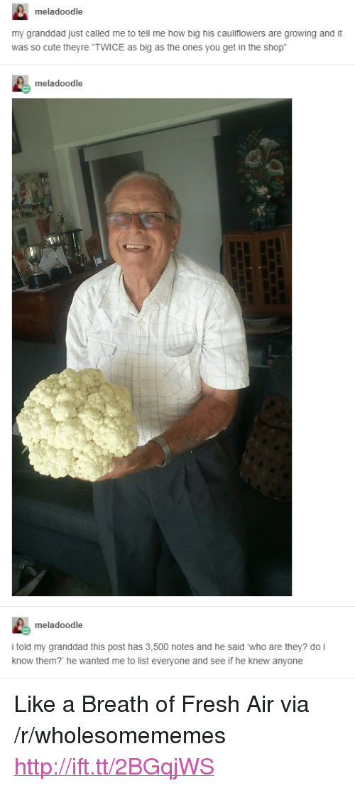 "Breath Of Fresh Air: meladoodle  my granddad just called me to tell me how big his cauliflowers are growing and it  was so cute theyre ""TWICE as big as the ones you get in the shop  meladoodle  meladoodle  i told my granddad this post has 3,500 notes and he said who are they? do i  know them? he wanted me to list everyone and see if he knew anyone <p>Like a Breath of Fresh Air via /r/wholesomememes <a href=""http://ift.tt/2BGqjWS"">http://ift.tt/2BGqjWS</a></p>"