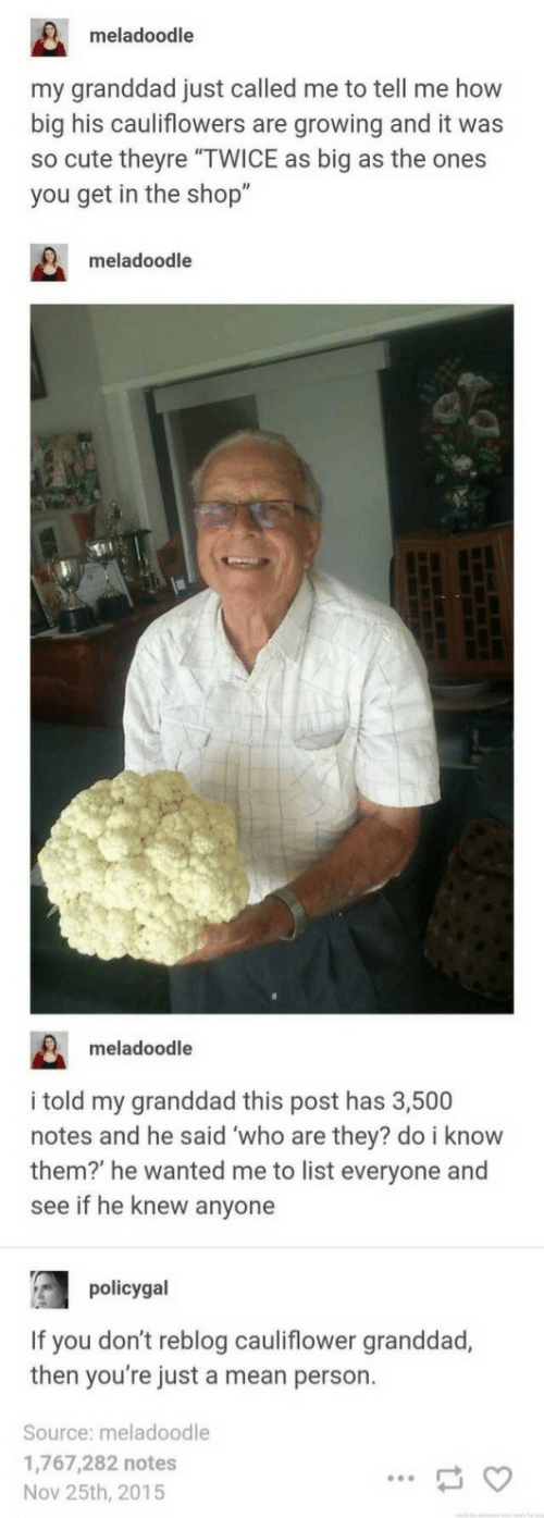 """Cute, Mean, and How: meladoodle  my granddad just called me to tell me how  big his cauliflowers are growing and it was  so cute theyre """"TWICE as big as the ones  you get in the shop""""  meladoodle  meladoodle  i told my granddad this post has 3,500  notes and he said who are they? do i know  them? he wanted me to list everyone and  see if he knew anyone  policygal  If you don't reblog cauliflower granddad,  then you're just a mean person.  Source: meladoodle  1,767,282 notes  Nov 25th, 2015"""