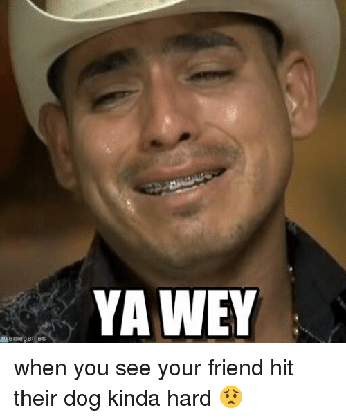 Dogs, Friends, and Funny: memegen es  YAWEY when you see your friend hit their dog kinda hard 😟