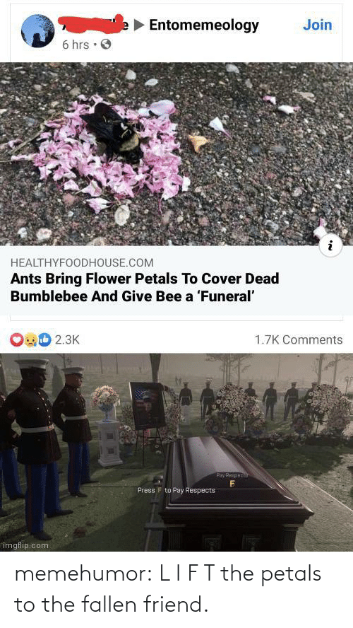 fallen: memehumor:  L I F T the petals to the fallen friend.