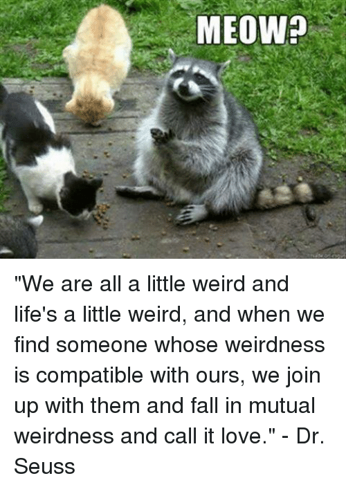 MEOW? We Are All a Little Weird and Life's a Little Weird and When