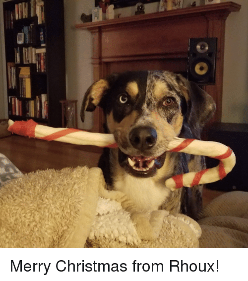 Christmas, Merry Christmas, and Merry: Merry Christmas from Rhoux!