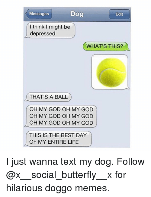 God, Life, and Memes: Messages  Dog  Edit  l think I might be  depressed  WHAT'S THIS?  THAT'S A BALL  OH MY GOD OH MY GOD  OH MY GOD OH MY GOD  OH MY GOD OH MY GOD  THIS IS THE BEST DAY  OF MY ENTIRE LIFE I just wanna text my dog. Follow @x__social_butterfly__x for hilarious doggo memes.