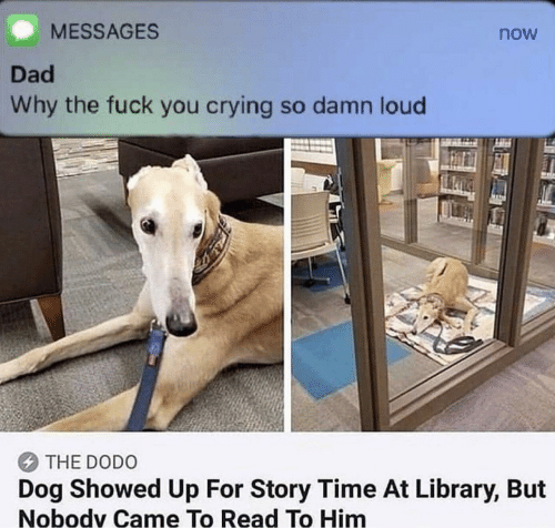 Story Time: MESSAGES  now  Dad  Why the fuck you crying so damn loud  THE DODO  Dog Showed Up For Story Time At Library, But  Nobodv Came To Read To Him