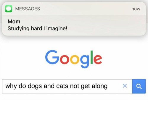 MESSAGES noW Mom Studying Hard L Imagine! Google Why Do Dogs