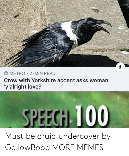 Dank, Love, and Memes: METRO 2-MIN READ  Crow with Yorkshire accent asks woman  'y'alright love?'  SPEECH TO0 Must be druid undercover by GallowBoob MORE MEMES