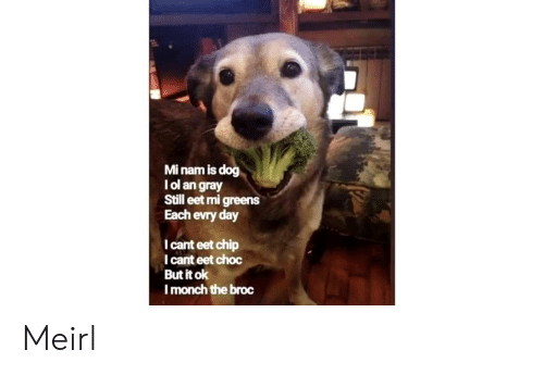 MeIRL, Chip, and Dog: Mi nam is dog  l ol an gray  Still eet mi greens  Each evry day  I cant eet chip  I cant eet choc  But it ok  Imonch the broc Meirl