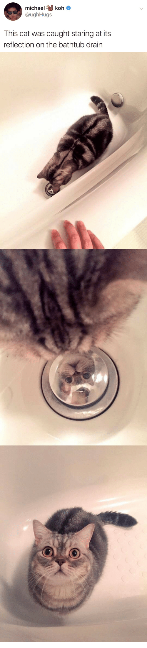 koh: michael koh  @ughHugs  This cat was caught staring at its  reflection on the bathtub drain