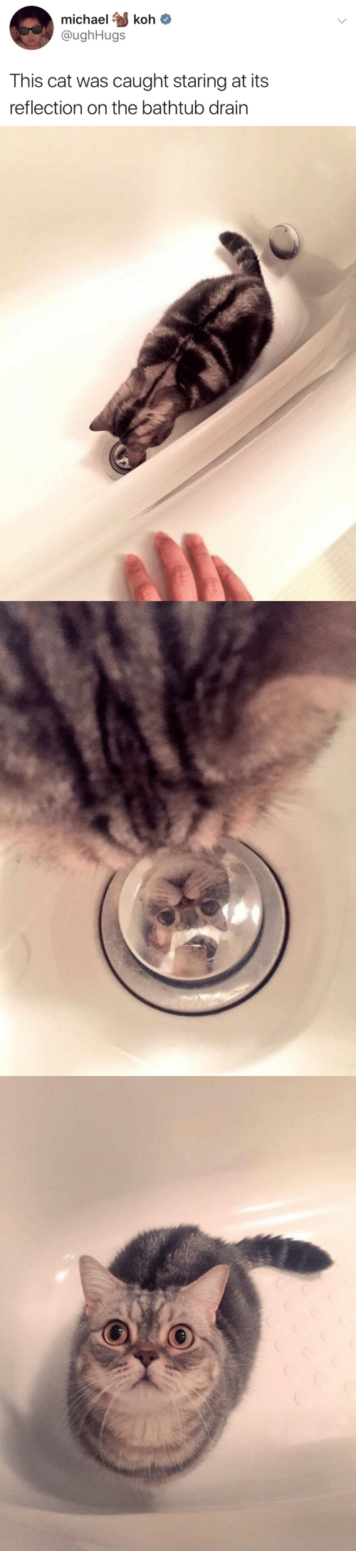 Michael, Cat, and Reflection: michael koh  @ughHugs  This cat was caught staring at its  reflection on the bathtub drain