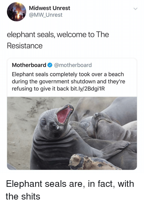 Midwest: Midwest Unrest  @MW Unrest  elephant seals, welcome to The  Resistance  Motherboard@motherboard  Elephant seals completely took over a beach  during the government shutdown and they're  refusing to give it back bit.ly/2Bdgi1R Elephant seals are, in fact, with the shits