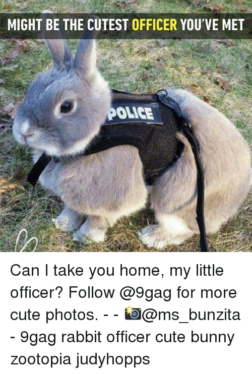 9gag, Cute, and Memes: MIGHT BE THE CUTEST OFFICER YOU'VE MET  OLICE Can I take you home, my little officer? Follow @9gag for more cute photos. - - 📸@ms_bunzita - 9gag rabbit officer cute bunny zootopia judyhopps
