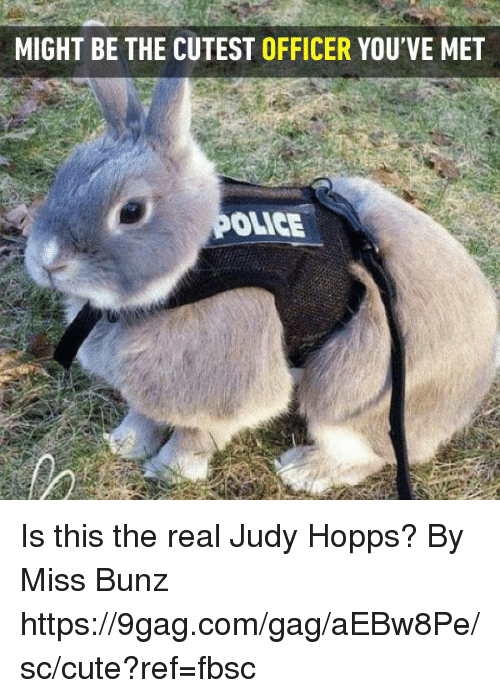 hopps: MIGHT BE THE CUTEST OFFICER YOU'VE MET  OLICE Is this the real Judy Hopps?   By Miss Bunz  https://9gag.com/gag/aEBw8Pe/sc/cute?ref=fbsc